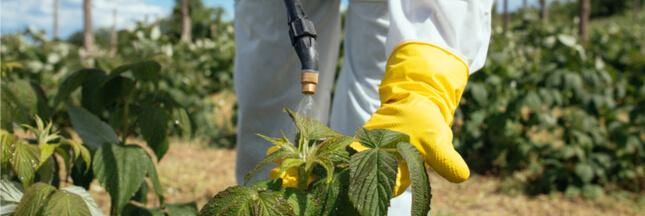 Bientôt, les microbes remplaceront les pesticides