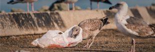 Plastic Attack, No Plastic Challenge: au mois de juin, mobilisez-vous contre la pollution plastique!