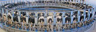 Grogne en France : la PAC réduit ses aides aux agriculteurs