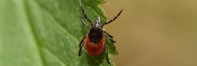 Maladie de Lyme : les modalités de diagnostic pourraient évoluer