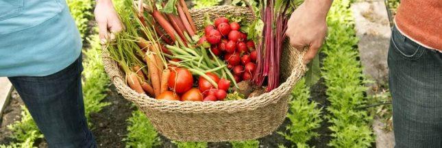 Ambition bio: Le gouvernement vise 15% de surfaces agricoles bio à l'horizon 2022