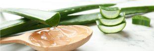 L'aloe vera, vertus et bienfaits santé d'une plante miracle