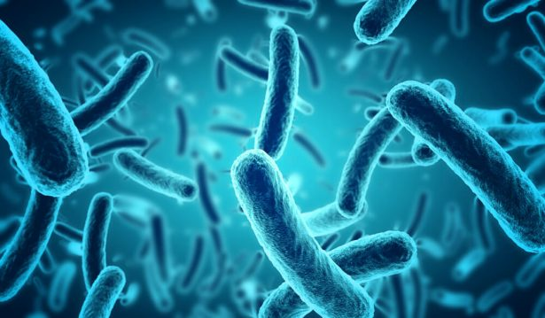 banques bactéries