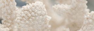 Sauver le corail grâce à la dentelle du Puy-en-Velay