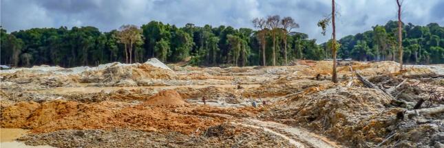 Déforestation : un terrain de foot perdu chaque seconde en 2017