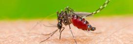 8 gestes pour éloigner les moustiques-tigre