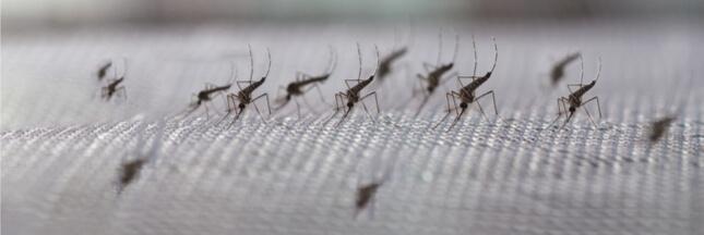 sondage protections anti-moustiques