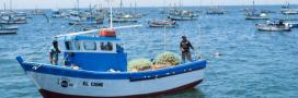 Dauphins, loutres, otaries… chassés pour servir d'appât