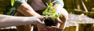 La synergie végétale et humaine en permaculture