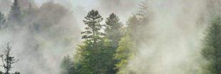 Sélection livre- Pour en finir avec l'écologie punitive