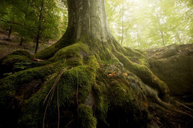 malnutrition arbres
