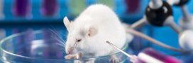 Pourquoi faut-il réhabiliter les animaux de laboratoire? Interview de Marie-Françoise Lheureux