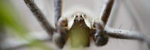 Vidéo. Les 5 araignées les plus dangereuses du monde