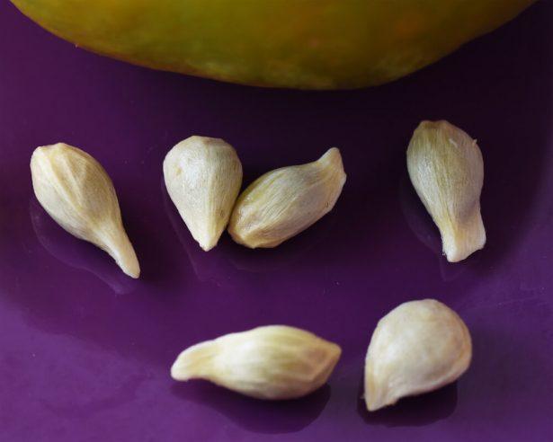 semer pépins agrumes