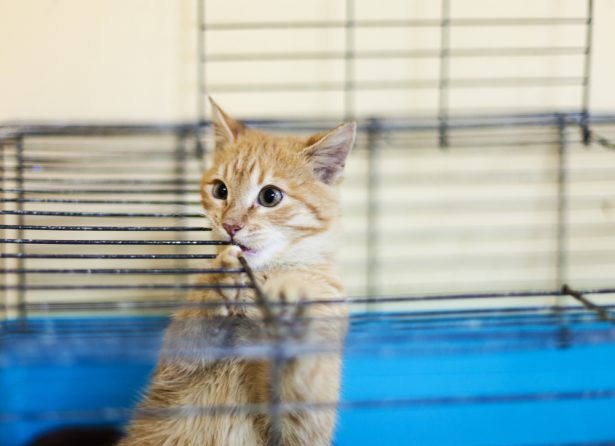 réhabiliter animaux laboratoire