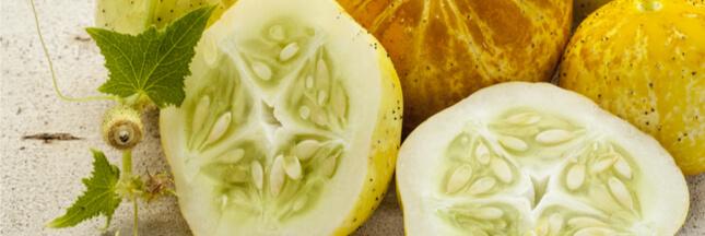 Les légumes oubliés: le concombre lemon