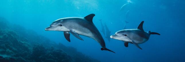 Des répulsifs sonores sur les filets pour sauver les dauphins
