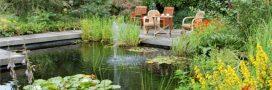 Jardin écologique. Comment créer une mare naturelle?