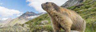 Vacances: 10 animaux à observer cet été