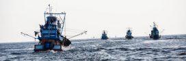 Seulement 13% des océans restent 'sauvages'