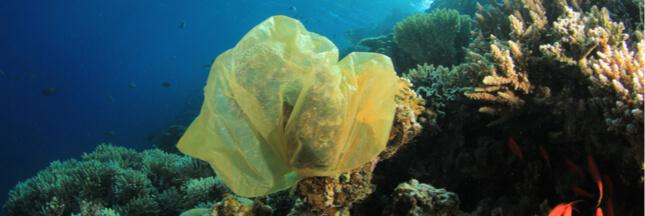 Enfin un plastique qui se dissout dans l'eau !