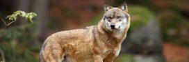 Nos recommandations de base pour observer la faune sauvage