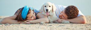 Sondage - Les vacances d'été : avec ou sans votre animal de compagnie ?