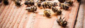 Cinq néonicotinoïdes interdits pour sauver les abeilles