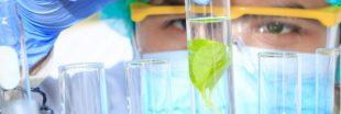 Découverte d'un conservateur alimentaire végétal plus efficace que les artificiels