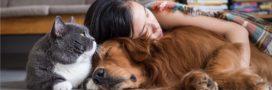 Les néonicotinoïdes interdits… sauf pour nos chiens et chats!
