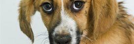 Maltraitance des animaux: ça bouge en France et au Royaume-Uni