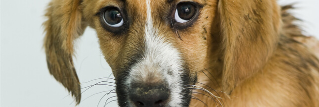 Maltraitance des animaux : ça bouge en France et au Royaume-Uni
