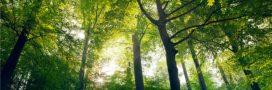 Il y a davantage d'arbres sur terre qu'il y a 35 ans