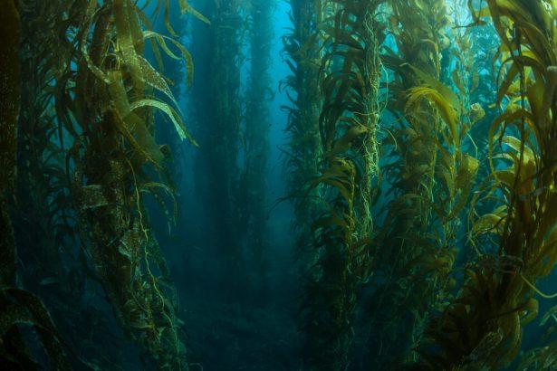 canicules océaniques