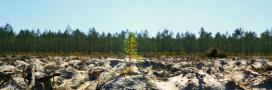 Sélection film– 'Le temps des forêts': documentaire édifiant sur l'état de nos forêts!