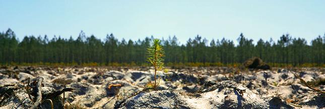 Sélection film- 'Le temps des forêts' : documentaire édifiant sur l'état de nos forêts !