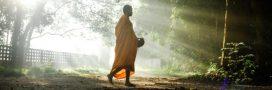 L'idée originale des moines thaïlandais pour lutter contre la déforestation
