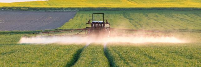 Cultiver bio, aussi rentable qu'avec des pesticides?