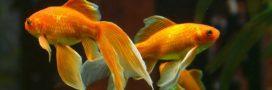 Pourquoi faut-il tester l'eau de son aquarium et comment faire?