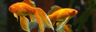 Pourquoi faut-il tester l'eau de son aquarium et comment faire ?