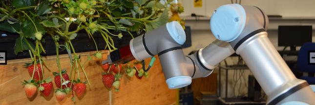 Des robots  pour remplacer les saisonniers dans les champs après le Brexit !