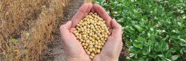 Le soja américain, un danger pour les agriculteurs et les consommateurs européens?