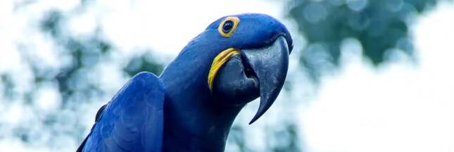 8 espèces d'oiseaux sont confirmées disparues en seulement une décennie
