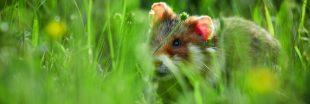 Ces animaux de nos campagnes que nos enfants risquent de ne jamais connaître ! - Diaporama