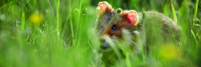 Ces animaux de nos campagnes que nos enfants risquent de ne jamais connaître! – Diaporama