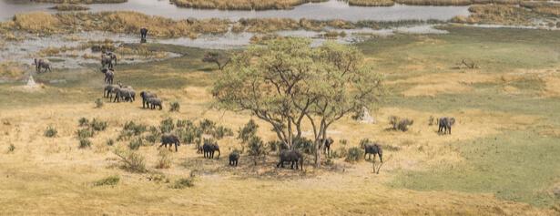 massacre éléphant