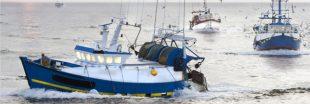 En Méditerranée, la pêche artisanale en pleine métamorphose