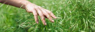 Comment semer un gazon naturel ? Nos astuces écologiques