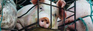Pour la cause animale, des personnalités en cage ce matin à Paris