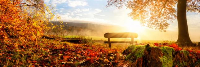 Sondage - C'est l'automne : ressentez-vous les effets du changement de saison ?